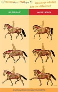 Tässä kuvasarjassa näkyy ravin diagonaaliparien toiminta erilaisissa muodoissa ja askelpituuksissa. Lupa ja lähde kuvan käyttöön: http://www.dressur-studien.de/