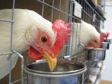 Kanojen koulussa