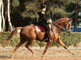 Eversti Carde: kouluratsun fyysinenvalmentaminen