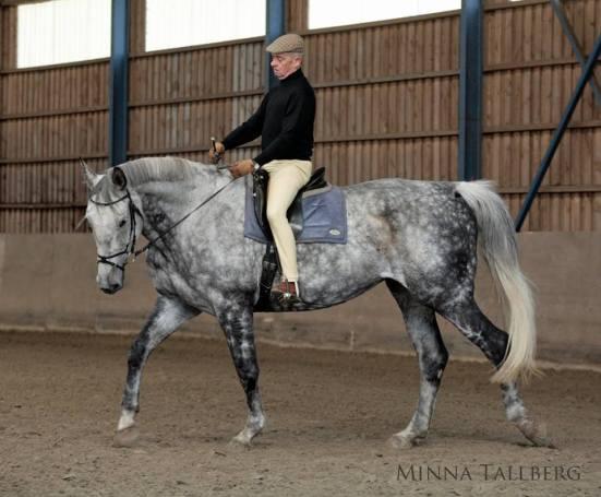 Tässä kuvassa eversti Carde on pyytänyt hevosta asettumaan. Lisäämällä hieman aktiivisuutta tahdin säilyttäen hän saa hevosen ojentautumaan hyödylliseen kurkotukseen kohti kuolainta. Kuvan hevonen on C's Ramona.