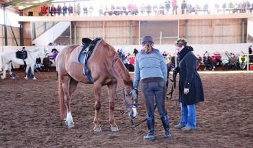 Lakora harjoitteli omistajansa Annukan kanssa pää alhaalla peruuttamista huolellisesti pieniin pilkoituista harjoituksen osista alkaen.