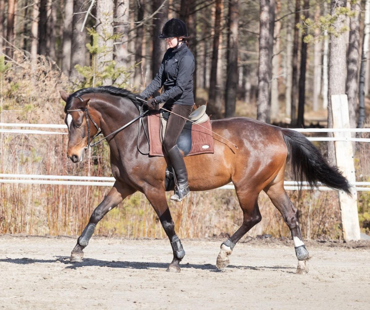 Kouluratsastus on hevosen jumppaohjelma