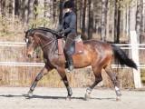 Kouluratsastus on hevosenjumppaohjelma