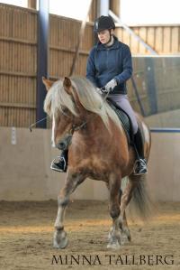 Hyvässä ja tehtävään sopivassa sivusuuntaisessa ja pitkittäisessä tasapainossa liikkuva hevonen on keveä tuntumalla, nopea reagoimaan pieniin apuihin ja levollinen.