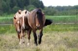 Mitä hevonen tarvitsee?