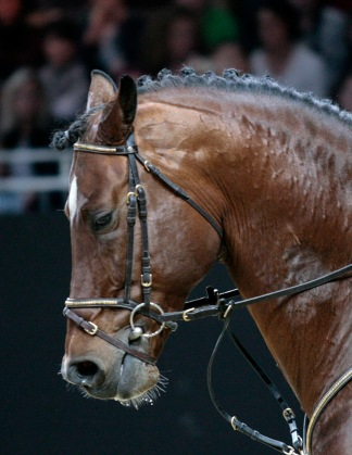 Tense facial expression, the neck and the jaw are locked. The expression resembles the pain face found in equine research.