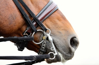 A relaxed mouth and muzzle