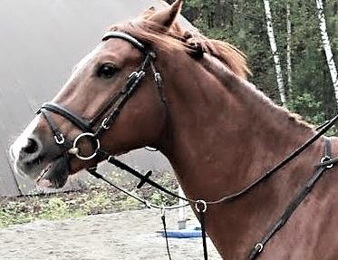 jannittynyt hevonen